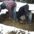 Cold Dirt: Digging in the Winter